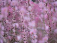 龍尾神社 - Photographie de la couleur