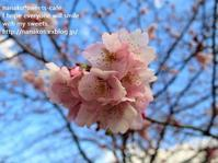 お出かけ~桜咲いてた! - nanako*sweets-cafe♪