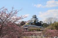 掛川城と龍尾神社 - 光さんの日常