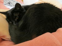 ミンちゃんの診断 - 英国猫づくし便り