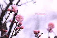 ume pink - IL EST TROP TARD     時は過ぎゆく ...