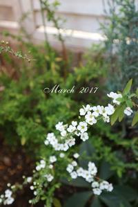 2017... 3/11... 3月の花々 - 毎日がばら色