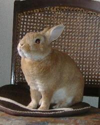 9才のミニウサギ - ガラス造形に魅せられて。。。