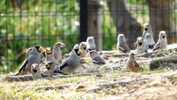 3月 野川野鳥観察会 - 山と鳥を愛するアナパパ