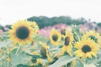 万博記念公園の花の丘 - photomo