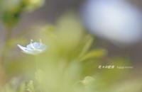いつもの散歩道 - 花々の記憶
