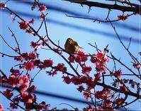 ◆近くのちいさな公園にメジロさんが遊びに来てました(^ω^) - ☆彡ちいさな幸せ☆彡別館