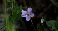 春の兆し その4 - 紀州里山の蝶たち