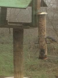 野鳥の朝食 - イギリス ウェールズの自然なくらし