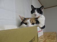 Amazonの箱も。 - まったり麻呂~ん☆