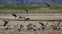 本命現れず・・・ - 一期一会の野鳥たち