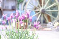 春を感じるお花 - mon dimanche blog