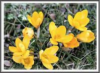 春がきた! - - Une phrase -