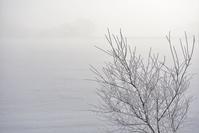 名残の霧氷 - やぁやぁ。
