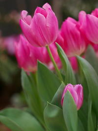 春の植物園 - 心の色~光生写真館~
