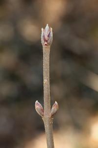 3月の森~新芽撮り - miyabine's フォト日記2~身の周りのきれい・可愛い・面白い~