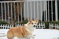 庭で - むーちゃんパパのブログ 3