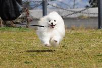 ■■ 飛行犬 - Tatu-tatu兄やんBlog