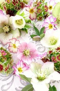 今日のお花 - tuboniwanisaku