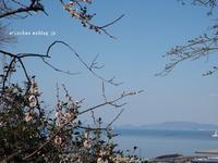 瀬戸内海と梅♪ - アリスのトリップ