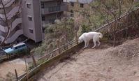 坂 - 小太郎の白っぽい世界