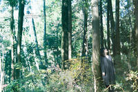森ガール - Makanani
