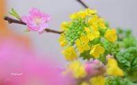 春の色。 - Precious*恋するカメラ