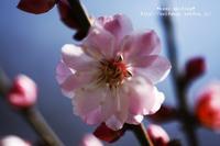 春♪ - *keep smiling*