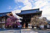 興正寺の紅白梅 - 花景色-K.W.C. PhotoBlog