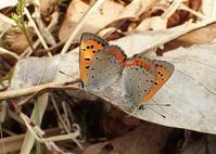 丘陵地の春 - 公園昆虫記