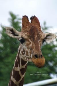 キヨミズ - 動物園でお散歩