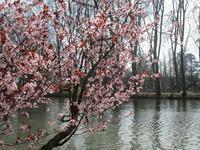 春です! - フランス Bons vivants idees d'aujourd'hui