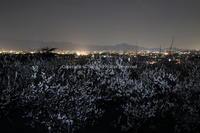 白梅 宵の月とほのかな かほり - ratoの大和路