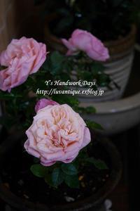 春の色 - Y's Handwork Days