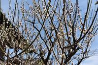 春です。白シャツです。。。INDIVIDUALIZED SHIRTS - selectorボスの独り言   もしもし?…0942-41-8617で細かに対応しますョ  (サイズ・在庫)