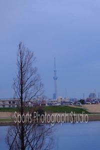 早朝の江戸川 - スポーツカメラマン国分智の散歩の途中で