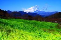 29年3月の富士(12)丘陵からの富士 - 富士への散歩道 ~撮影記~