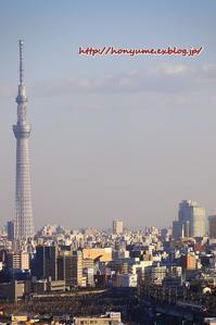 02/02 赤い新幹線 ~その4~ - 本日の夢旅人