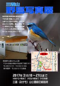 写真展のご案内 - ぶらり探鳥