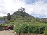 ヌワラエリヤの紅茶工場見学!その2 - Da bin ich! -わたしはここにいます-
