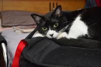 ねこのバッグお預かりサービスについて - ネコとSUBARUとBIKEとREDS