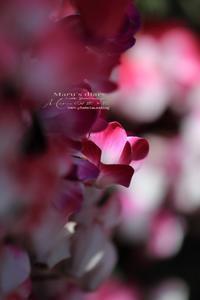 まゝに/森林公園/花の生垣 - Maruの/ まゝに