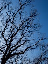 青空に伸びる - ノッツォのホデナス