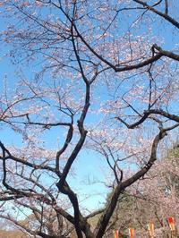 武蔵野紀行2 - はーとらんど写真感