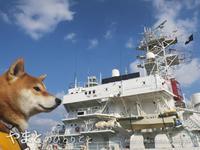 海犬 - yamatoのひとりごと