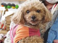 ドッグデンタルケアイベント - SUPER DOGS blog