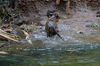 ハラハラドキドキ - 動物園へ行こう