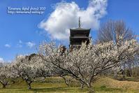 早春の備中国分寺 - 気ままな Digital PhotoⅡ