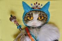 猫の王国 - anemoNeko