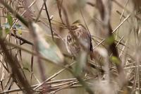オシドリ池は変化なし - 野鳥写真日記 自分用アーカイブズ